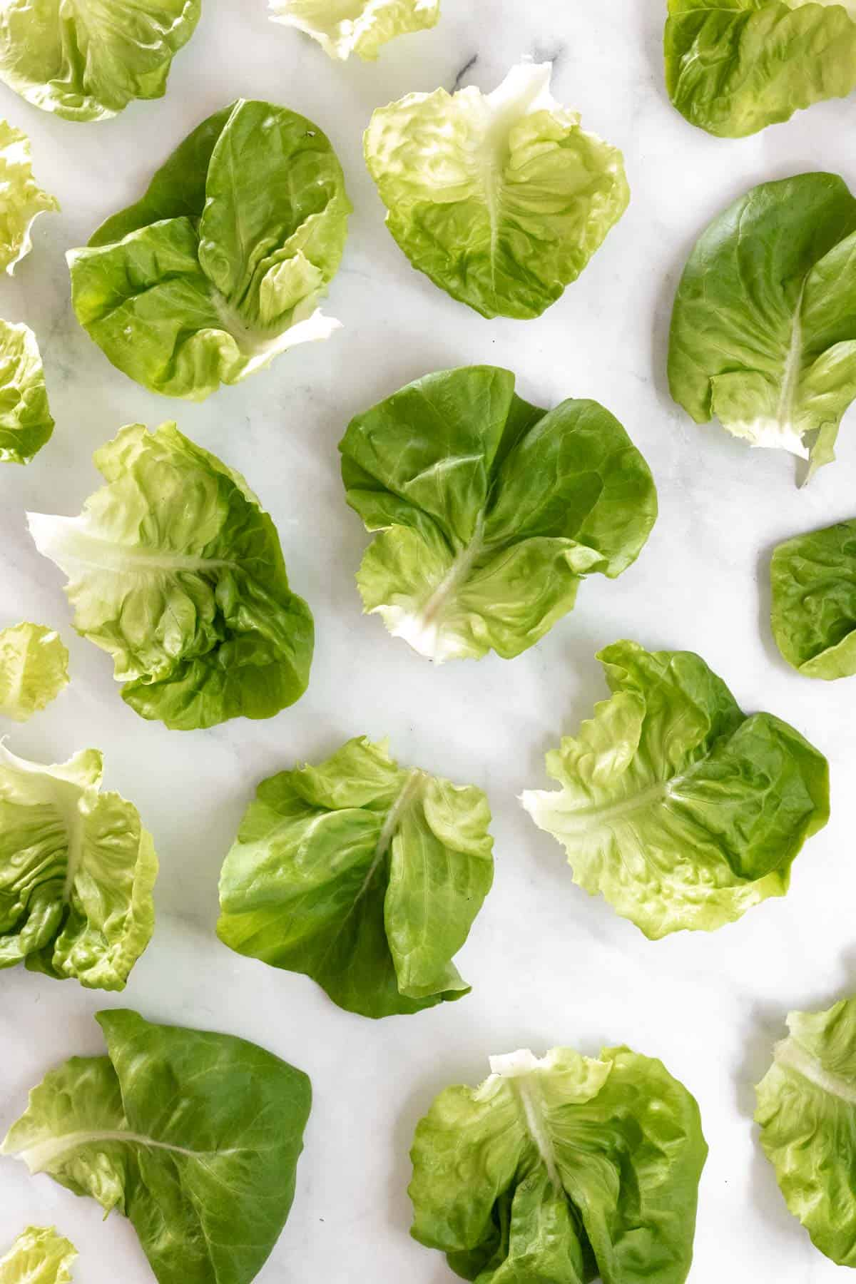 Washed and dried lettuce cups on a white backdrop.